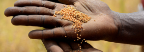 GCP-4 Scaling climate-smart nutrient management tools in Africa