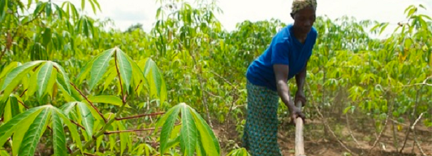 Conference: How business can make smallholder supply chains resilient