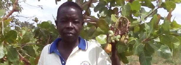 ARF-1.1 Cashew nuts Uganda
