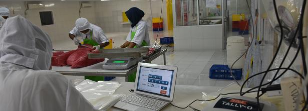 ARF-1 factsheet Indonesia tuna supply chain