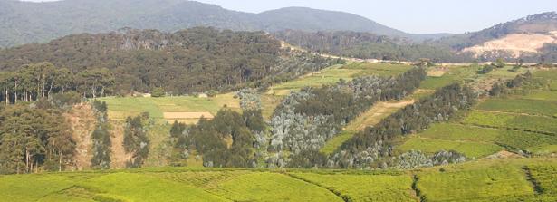 Building food and nutrition sensitive landscapes