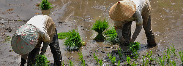 Netherlands-CGIAR partnership launches call to fund senior CGIAR experts