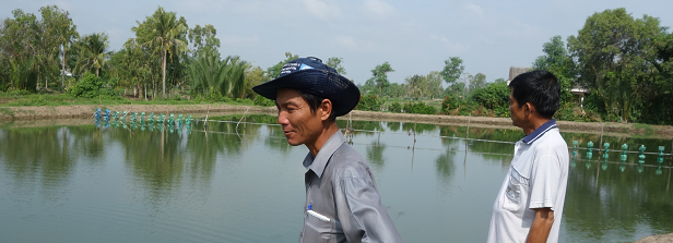 How is innovation in aquaculture conceptualized and managed?