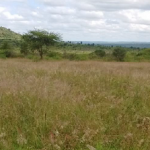 ARF-3 ROFIP project - Project site after reseeding (after the March-May, 2018 long rains); South Eastern Kenya University, Kitui County, Kenya