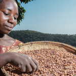 Almost nine Million euros for improving seed systems in Asia and Sub-Saharan Africa
