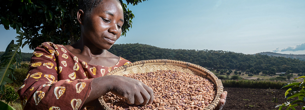 Nine projects funded to improve seed systems in Asia and Sub-Saharan Africa