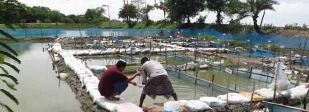 Water quality sampling in Bangladesh
