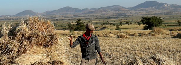 Dutch companies do contribute to food security in Ethiopia