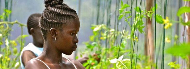 Webinar Climate resilience and job prospects for young people in agriculture