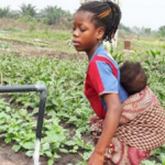 GCP-3 project Allotment Gardens Africa - Story of Change