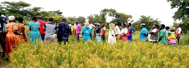 ARF-3 factsheet: ERIGNU in Uganda