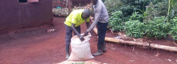 ARF-3 factsheet: Seed system for AIV in Uganda