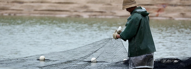 Aquaculture improvement projects: the private sector's tool to address risks beyond the farm?