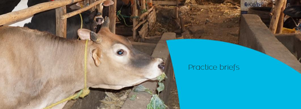 VHL University Practice Briefs - Inclusive and Climate smart dairy programme