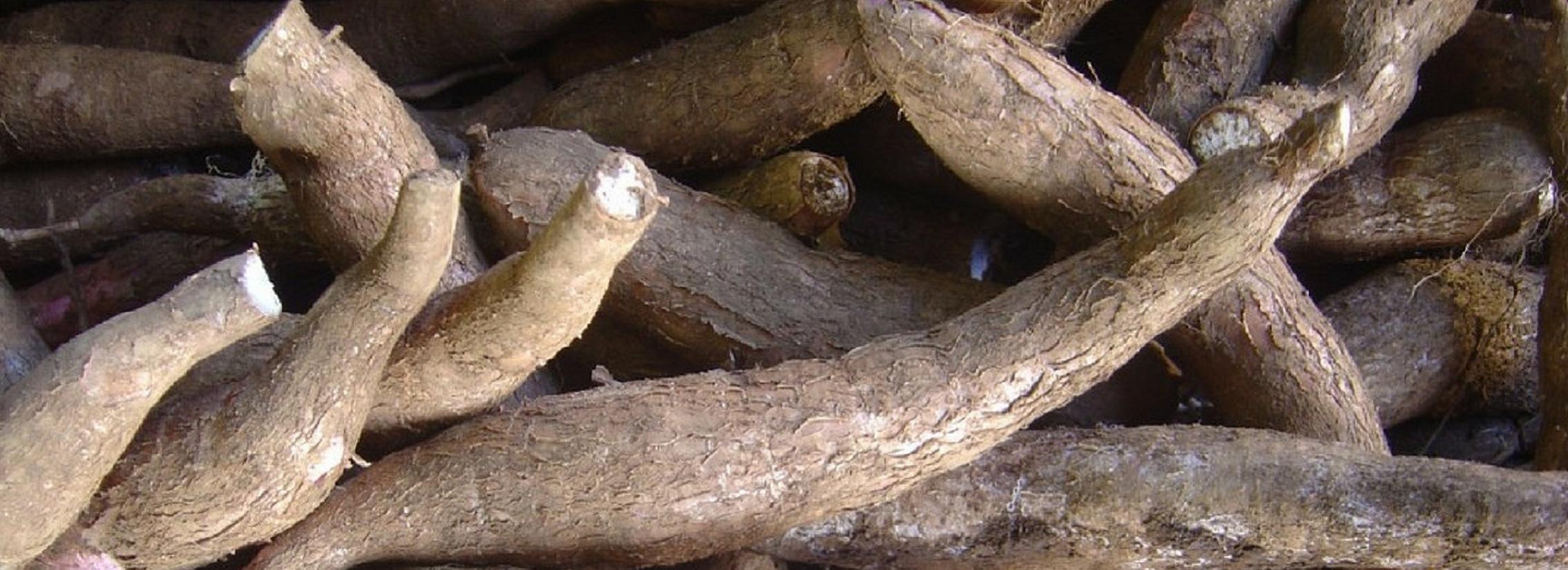 Scaling quality cassava seed systems - Rwanda & Burundi