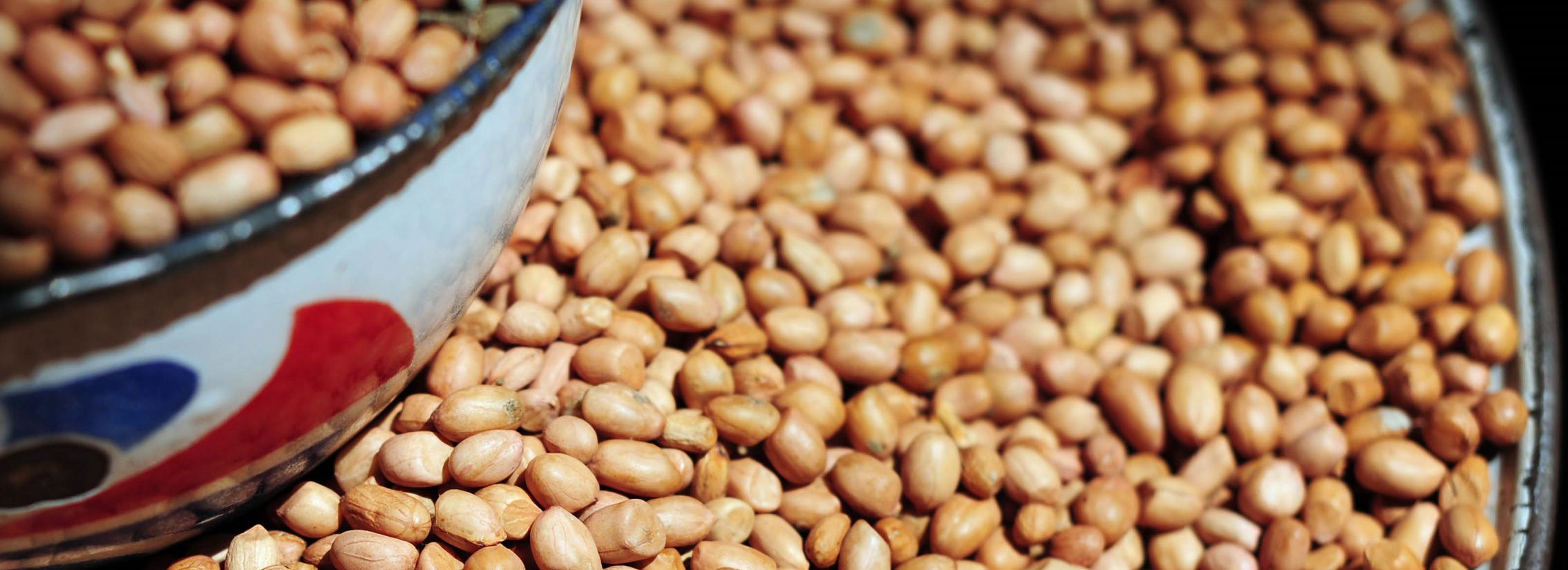 Upscaling improved groundnut varieties - Ghana & Mali