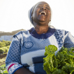 Turning knowledge on food systems into action