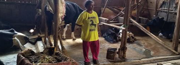 Dairy farmers in Ethiopia successfully adopt herbal recipes and other natural measures
