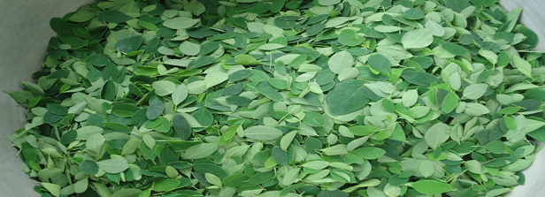 ARF-3 final factsheet: FortiMoringa in Benin