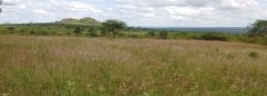 ARF-3.2 project Kenya ROFIP