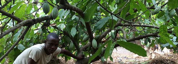 GCP-1 final factsheet: Helping poor farmers grow money in Sierra Leone