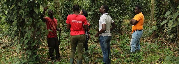 ARF-2 final factsheet Treefarms project Ghana
