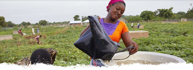 Webinar: Drip irrigation for smallholder farmers