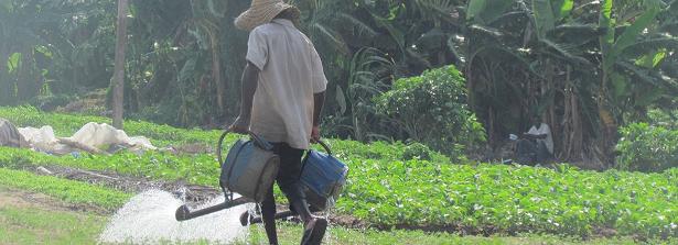 Final factsheet GCP-3 project Allotment gardens in Benin