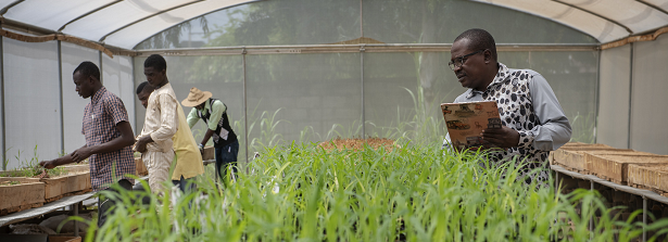 ATVET Success Stories Call for Africa Knows (image: Dr Hakeem Ajeigbe, ICRISAT)