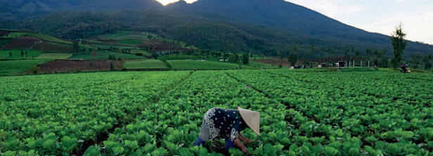Key findings and lessons from Dutch publicly funded horticulture initiatives in LMICs