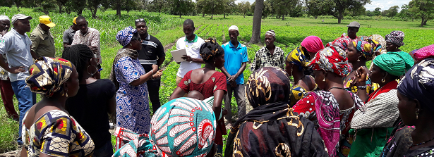 ARF-3 final factsheet: Seed production models in Mali