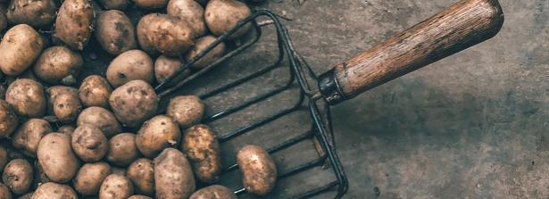 Potato concerence